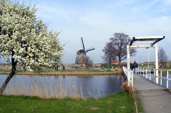 Réseau de moulins de Kinderdijk-Elshout : Most picturesque views!
