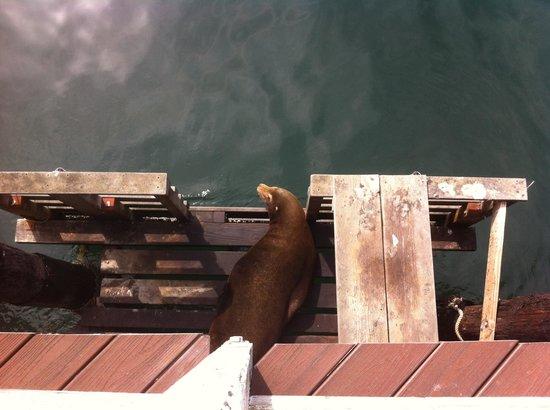 Monterey Plaza Hotel & Spa: Phoques de fischerman