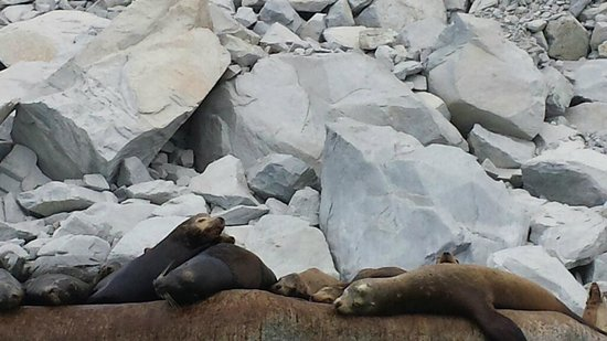 Eco Adventures: Seals at Cabo Pulmo