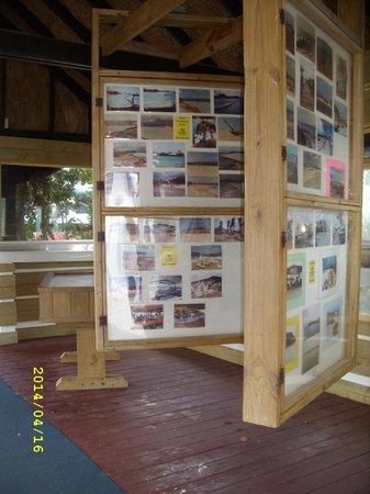 De Palm Island: Peces explicacion