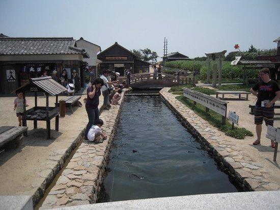 Movie Village of 24-no-Hitomi: 海の魚が泳いでおり、餌やりができるようだ
