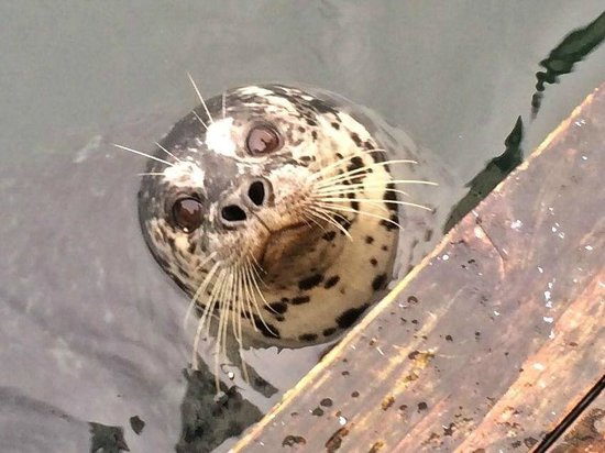 Eagle Wing Whale Watching Tours : Harbor Seal