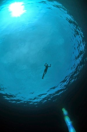 Hawaiian Paddle Sports: Free dive