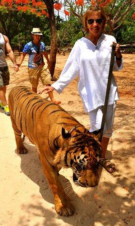 Tiger Temple ( Wat Pa luang Ta Bua) : Walking the kitty like a dog.