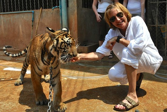 Tiger Temple ( Wat Pa luang Ta Bua) : Feeding the tiger some chicken....ended up with all my 10 fingers too!