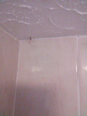 Ridgeway Hotel Chingford: Dead spider in bathroom
