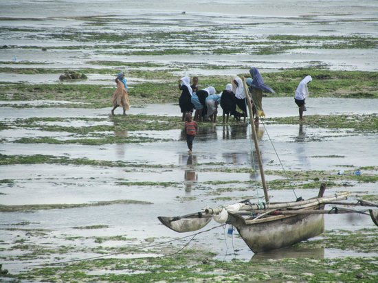 DoubleTree by Hilton Resort Zanzibar - Nungwi: low tide...children fishing