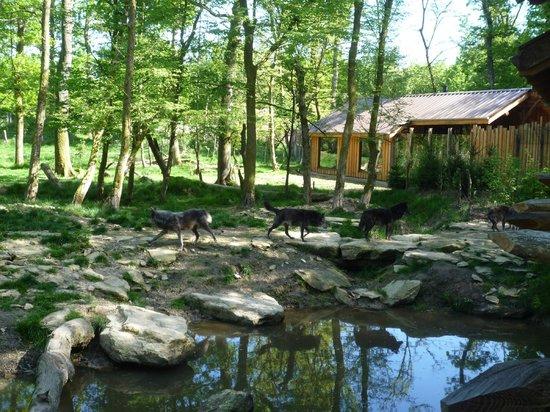 Parc Animalier de Sainte-Croix - Hébergements : vue ext2