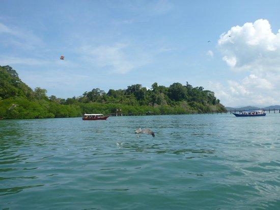 Island Hopping Tour with Ana, Langkawi : Singa Besar Island
