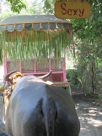 Villa Escudero Resort: On the carabao cart ride