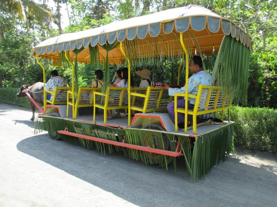 Villa Escudero Resort: Carabao Cart Ride