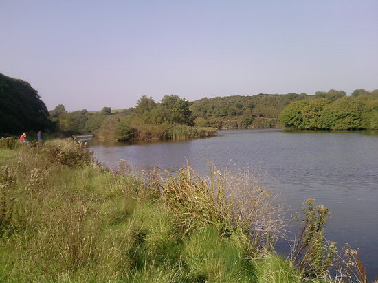 Rosehill Farm Bed and Breakfast: local walk along Brunel Cycle Track to West Pill and Neyland Marina where you can have refreshme