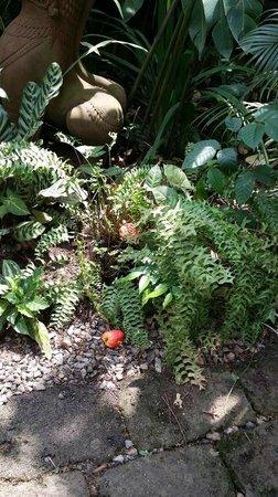 Heritage Suites Hotel: garden