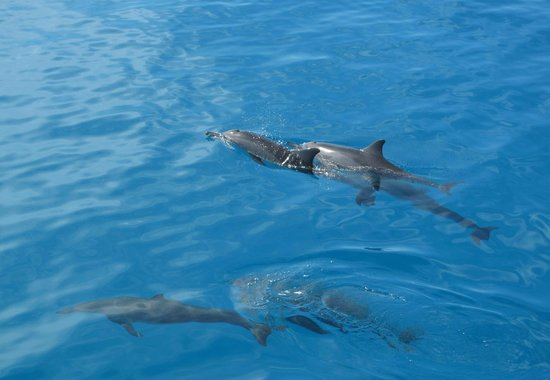 Fihalhohi Island Resort: Excursion dauphins
