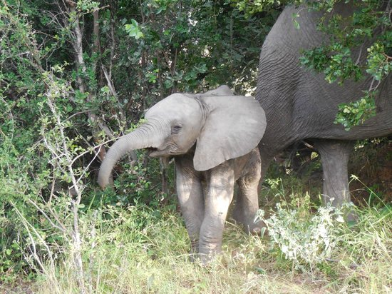 Naledi Bushcamp and Enkoveni Camp: Stuff to see