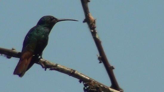LagunaVista Villas: Hummingbird
