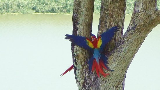 LagunaVista Villas: Macaws