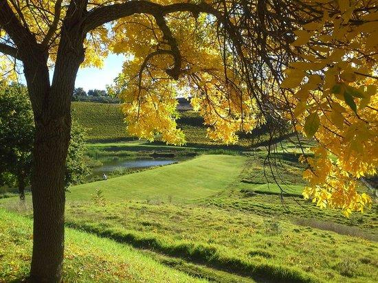 Alluvia Wine Estate: Colors were magnificent