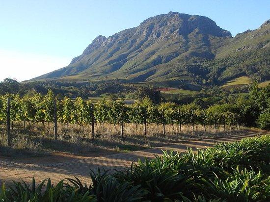 Alluvia Wine Estate: Mountains all around