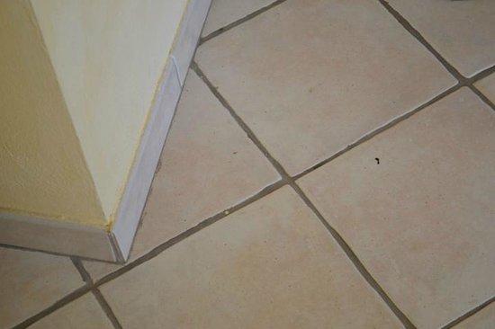 Bij binnenkomst lag de vloer vol rommel zand en beestjes