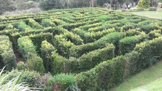 Amantikir: labirinto
