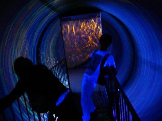 Ripley's Believe It or Not!: Black hole