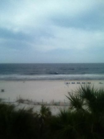 Osprey on the Gulf: view from our balcony!