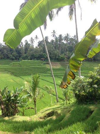 Cempaka Belimbing Villas: ballade offerte par l'hotel