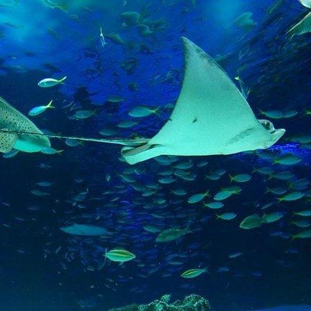 カエル - Picture of Sunshine Aquarium, Toshima - TripAdvisor