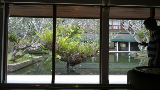 Bentota Beach by Cinnamon : Well maintained pond in lobby