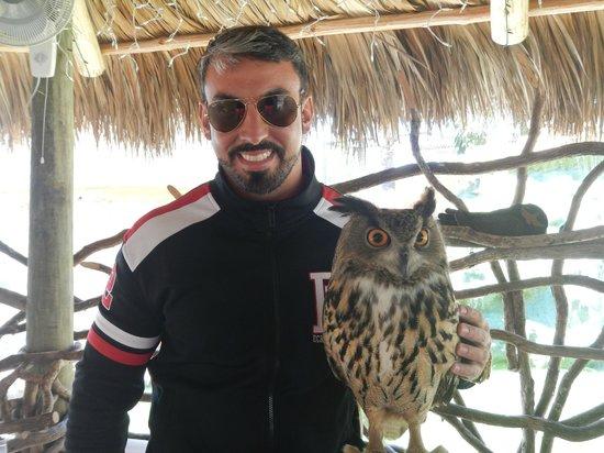 Zoological Wildlife Foundation: Coruja (incluido no pacote)