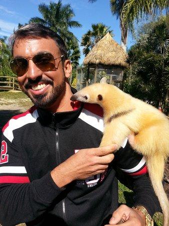 Zoological Wildlife Foundation: Tamandua Mirim (incluido no pacote)
