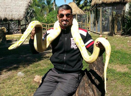 Zoological Wildlife Foundation: Anaconda Albina (incluido no pacote)