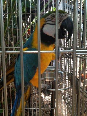 Nancy Forrester's Secret Garden: Batman, the macaw.