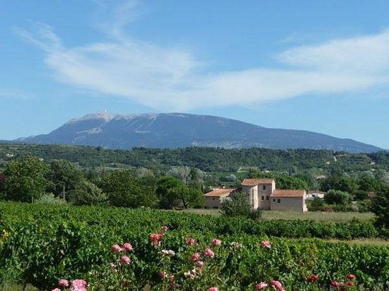 Gites la Franconne : View on Mont Ventoux