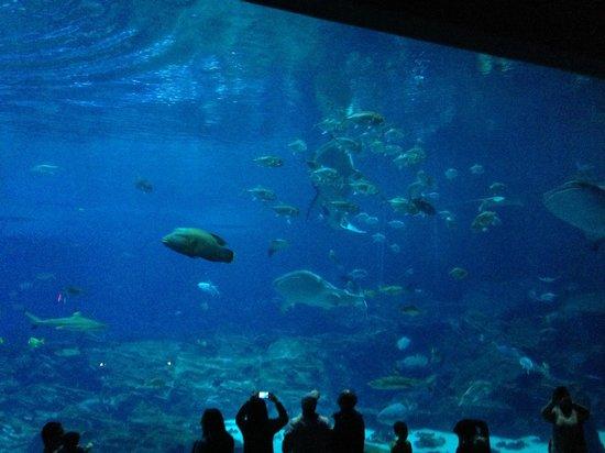 Sea Life Picture Of Georgia Aquarium Atlanta Tripadvisor