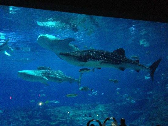 The Great Bernie Marcus Picture Of Georgia Aquarium
