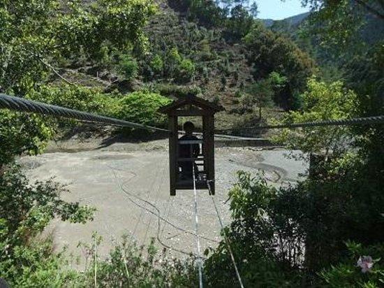 Totsukawa-mura, Japan: 野猿03