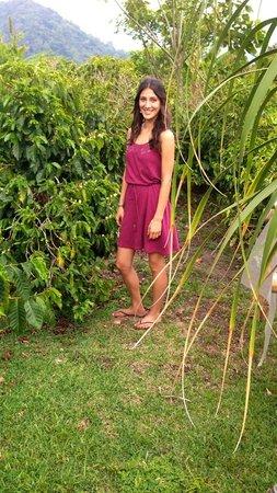 Boquete Coffee Tour : On the farm