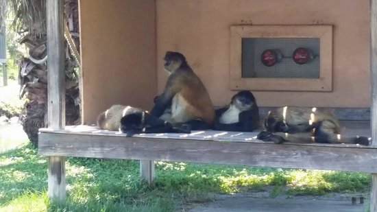 Naples Zoo at Caribbean Gardens : Primate Island