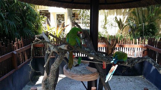 Parrots Picture Of Naples Zoo At Caribbean Gardens Naples Tripadvisor