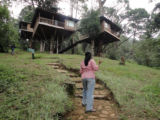Nature Zone Resort: Tree houses