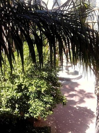 Tempe Mission Palms Hotel and Conference Center: View from our room