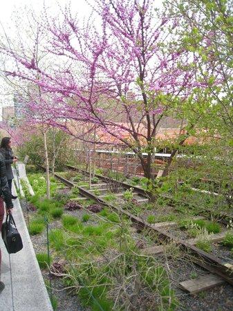 High Line : April 14