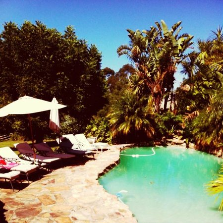 De Molen Guest House: The Pool