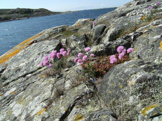 Southern Goteborg Archipelago: SCOGLIERE SUL MARE