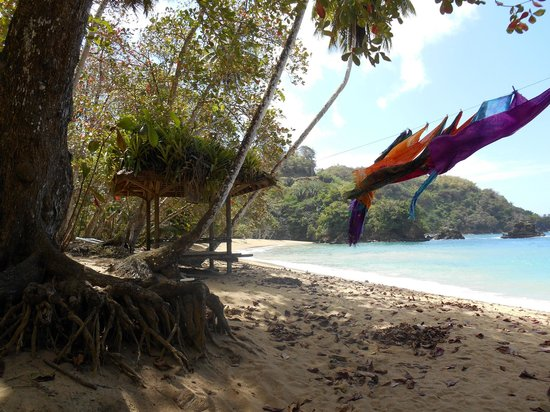 Coco Reef Tobago: English Man's Bay