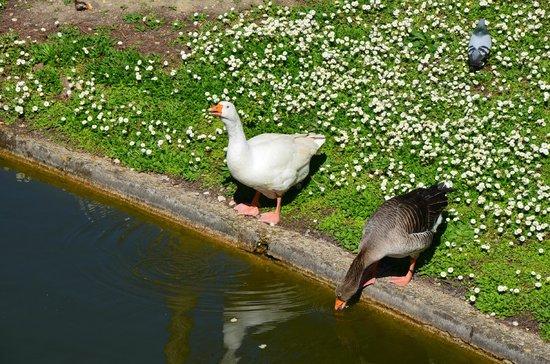 Jardin Public : oie et canard