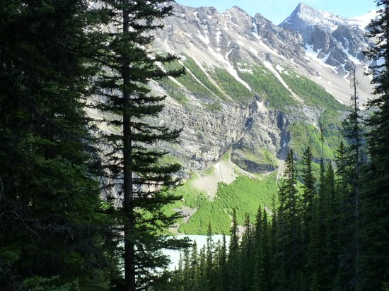 Kanadische Rockies, Kanada: The start of the hike up to Little Beehive.