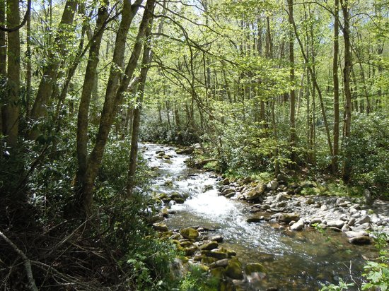 A Walk in the Woods : Smoky Mountain river trail!